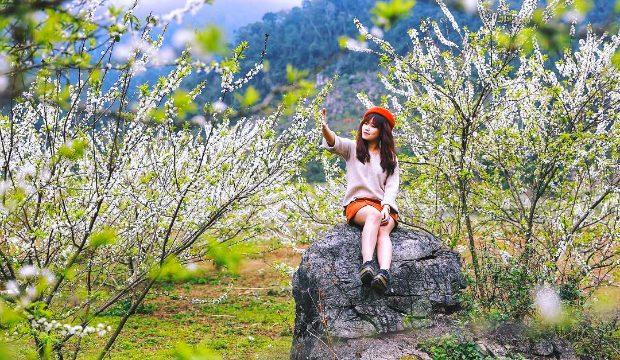 Đến Mộc Châu ngắm rừng Hoa Mận